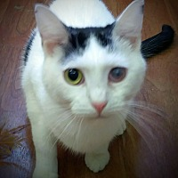 Adopt A Pet :: Shasta - Trevose, PA