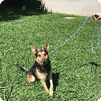 Adopt A Pet :: Keene - Greeneville, TN