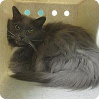 Adopt A Pet :: Billy - Reno, NV