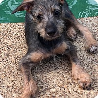Adopt A Pet :: CLIF - Moosup, CT
