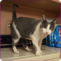 Adopt A Pet :: Hali - Sherman Oaks, CA