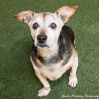 Adopt A Pet :: Daisy - Burlingame, CA