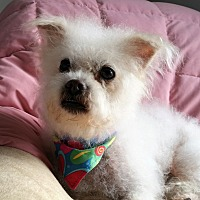 Adopt A Pet :: Roselyn - Newfield, NJ