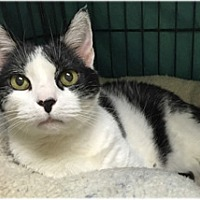 Adopt A Pet :: James - Milford, MA