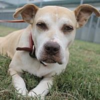 Adopt A Pet :: MERCEDES - Okatie, SC