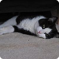 Adopt A Pet :: Roxanne - Monroe, NC