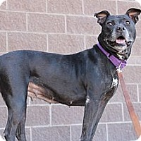 Adopt A Pet :: Vally - Fountain, CO