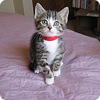 Adopt A Pet :: Aaden - Eagan, MN