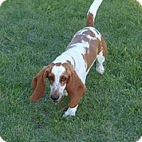 Adopt A Pet :: Shots - Toronto/Etobicoke/GTA, ON