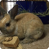 Adopt A Pet :: Happy - Williston, FL