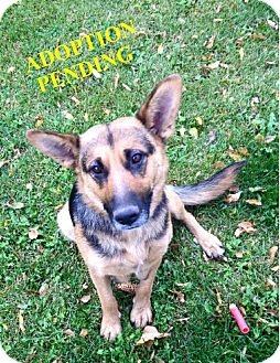 German Shepherd Dog Mix Dog for adoption in Winnipeg, Manitoba - HERA
