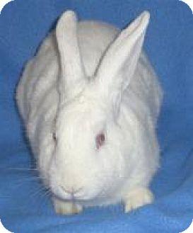 Florida White Mix for adoption in Woburn, Massachusetts - Meg