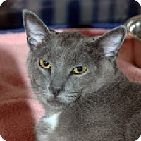 Adopt A Pet :: Sherman - Colorado Springs, CO