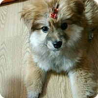 Adopt A Pet :: ARCHER - La Mirada, CA