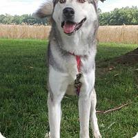 Adopt A Pet :: CHARLIE BOY - Salem, NH