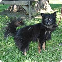 Adopt A Pet :: Carl - Parsons, KS