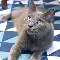 Adopt A Pet :: Slate - Chicago, IL
