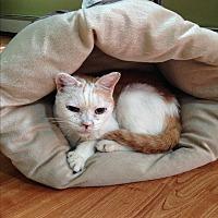 Adopt A Pet :: ROSIE - Ridge, NY