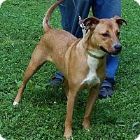 Adopt A Pet :: Aubrey - Normandy, TN