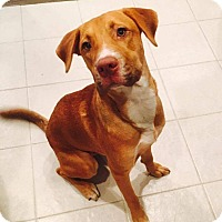 Adopt A Pet :: Thunder - Friendswood, TX