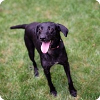 Adopt A Pet :: August - Lewisville, IN