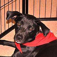 Adopt A Pet :: Riley - Smithtown, NY