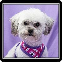 Adopt A Pet :: Tessa - Fort Braff, CA