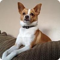 Adopt A Pet :: Tiny Tim - Marlton, NJ