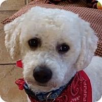 Adopt A Pet :: Andy - La Costa, CA