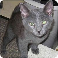 Adopt A Pet :: Cody - Catasauqua, PA