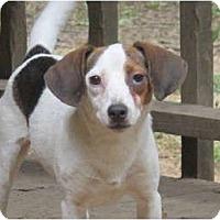 Adopt A Pet :: Peanut - Windham, NH