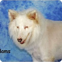 Adopt A Pet :: Adams - Ft. Myers, FL