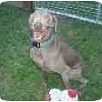 Adopt A Pet :: Bailey  **ADOPTED** - Eustis, FL