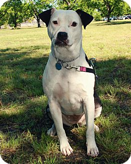 Pit Bull Terrier Mix Dog for adoption in Warner Robins, Georgia - Ava