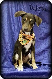 Hound (Unknown Type) Mix Puppy for adoption in Walker, Louisiana - Dakota