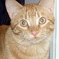 Adopt A Pet :: St James - Mississauga, Ontario, ON