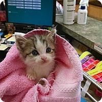Adopt A Pet :: Mouser - Armuchee, GA