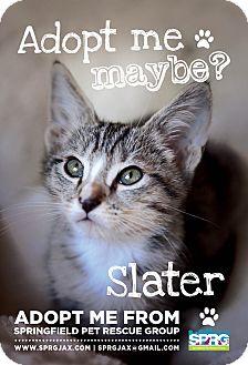 Domestic Shorthair Kitten for adoption in Jacksonville, Florida - Slater