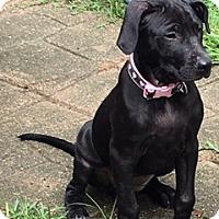 Adopt A Pet :: Hannah - Hamburg, PA