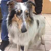 Adopt A Pet :: Bailey - Chantilly, VA