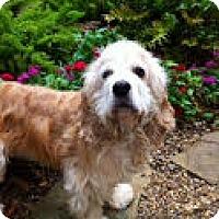 Adopt A Pet :: Shadow - Boulder, CO