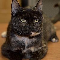 Adopt A Pet :: Tulip - Medina, OH