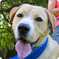 Adopt A Pet :: Biscuit - Lafayette, LA