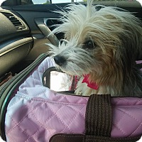 Adopt A Pet :: Princess Sassy - West Warwick, RI