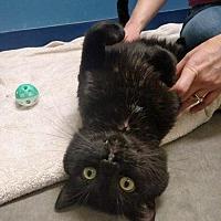 Adopt A Pet :: Avery- FeLV+ - Park Falls, WI