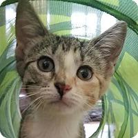 Adopt A Pet :: Kia - Colfax, IA