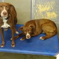 Adopt A Pet :: Tom - Delaware, OH