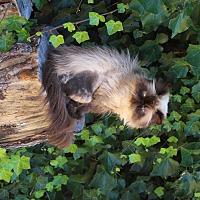 Adopt A Pet :: Roxie - Davis, CA