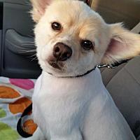 Adopt A Pet :: Ryker - San Diego, CA