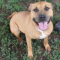 Adopt A Pet :: Riley - Fort Madison, IA